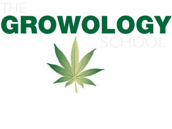Learn to grow marijuana san diego california