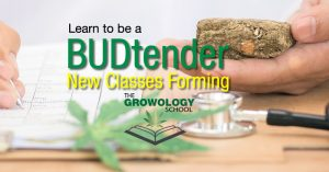 learn to budtender jobs dispensary