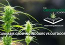grow pot indoors or outdoor gardens at home