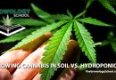 learn grow cannabis marijuana