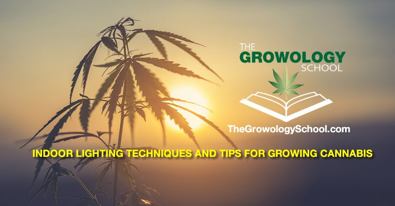 lights for growing marijuana weed pot how to grow indoors