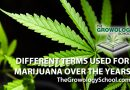 weed, hemp, marijuana, pot, how to grow, marijuana grow schools