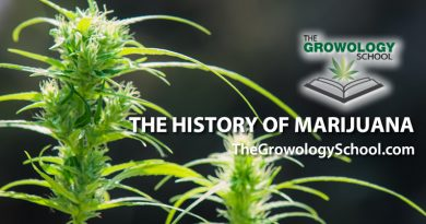 the history of marijuana cannabis learn to grow