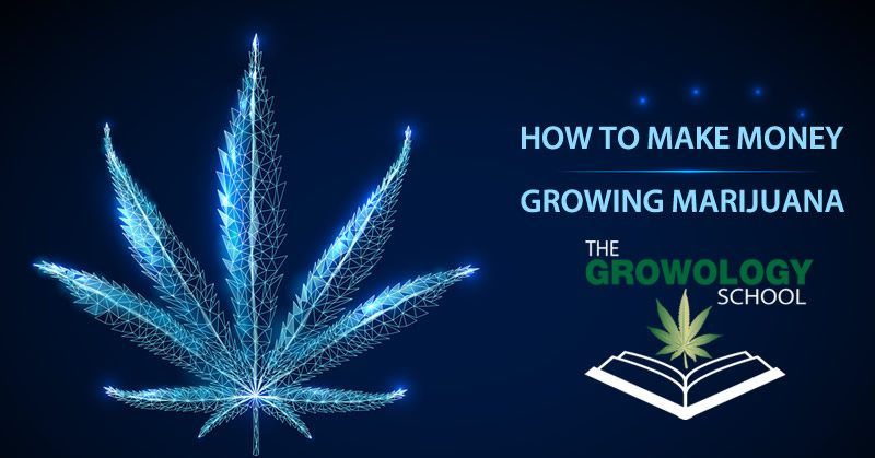 how to make money growing marijuana cannabis grow school