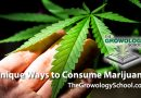 what to make from marijuana things to do cannabis plants