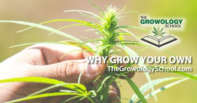 learn to grow marijuana schools
